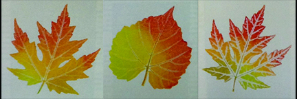 NBG Meeting To Feature Leaf Art! – 7.30.15